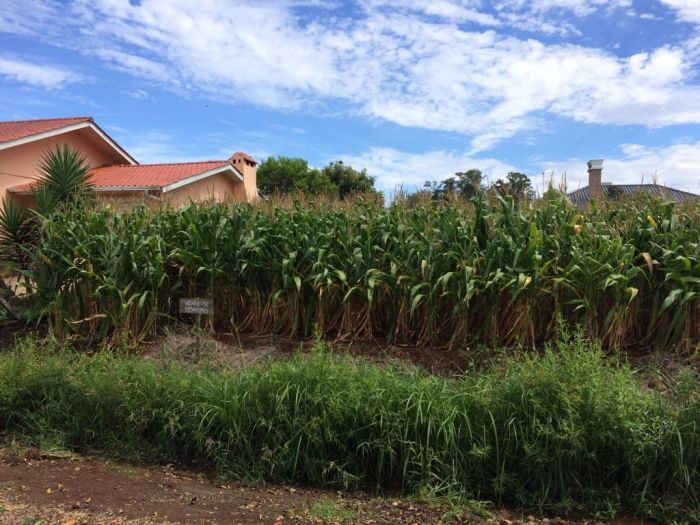 Terreno no bairro São Caetano em Arroio do Meio